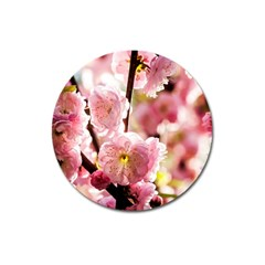 Blooming Almond At Sunset Magnet 3  (round) by FunnyCow