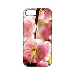 Blooming Almond At Sunset Apple Iphone 5 Classic Hardshell Case (pc+silicone) by FunnyCow