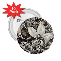 Flowers 1776382 1280 2 25  Buttons (10 Pack)  by vintage2030