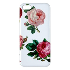 Roses 1770165 1920 Apple Iphone 5 Premium Hardshell Case by vintage2030
