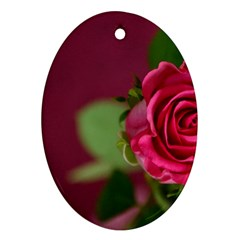 Rose 693152 1920 Oval Ornament (two Sides) by vintage2030