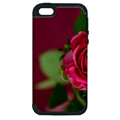 Rose 693152 1920 Apple Iphone 5 Hardshell Case (pc+silicone) by vintage2030