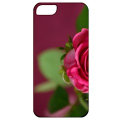 Rose 693152 1920 Apple Iphone 5 Classic Hardshell Case by vintage2030