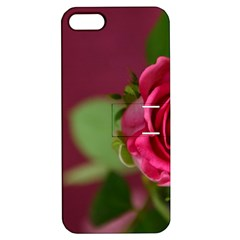 Rose 693152 1920 Apple Iphone 5 Hardshell Case With Stand by vintage2030