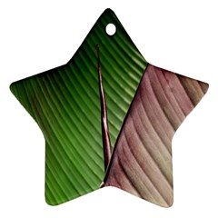 Leaf Banana Leaf Greenish Lines Ornament (star) by Sapixe