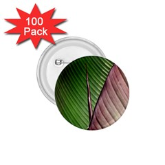 Leaf Banana Leaf Greenish Lines 1 75  Buttons (100 Pack)  by Sapixe