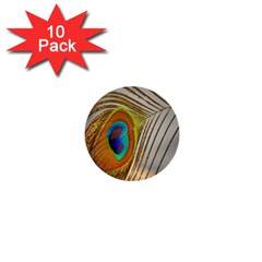 Peacock Feather Feather Bird 1  Mini Buttons (10 Pack)