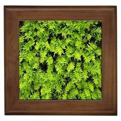 Green Hedge Texture Yew Plant Bush Leaf Framed Tiles