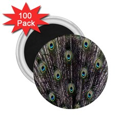 Background Peacock Feathers 2 25  Magnets (100 Pack)