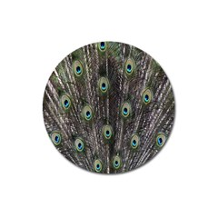 Background Peacock Feathers Magnet 3  (round)