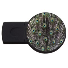 Background Peacock Feathers Usb Flash Drive Round (2 Gb)