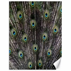 Background Peacock Feathers Canvas 18  X 24