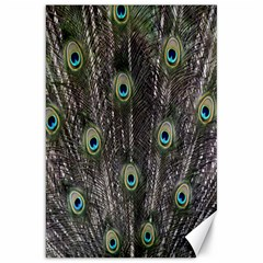 Background Peacock Feathers Canvas 20  X 30