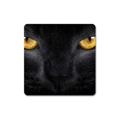 Face Black Eye Cat Square Magnet