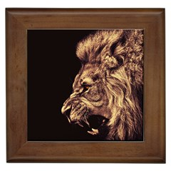 Angry Male Lion Gold Framed Tiles