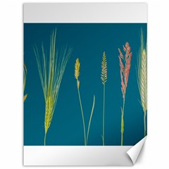Grass Grasses Blade Of Grass Canvas 36  X 48  by Nexatart