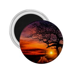 Lonely Tree Sunset Wallpaper 2 25  Magnets by Alisyart