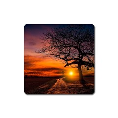 Lonely Tree Sunset Wallpaper Square Magnet