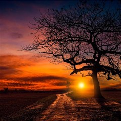 Lonely Tree Sunset Wallpaper Magic Photo Cube