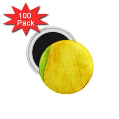 Green Yellow Leaf Texture Leaves 1 75  Magnets (100 Pack)
