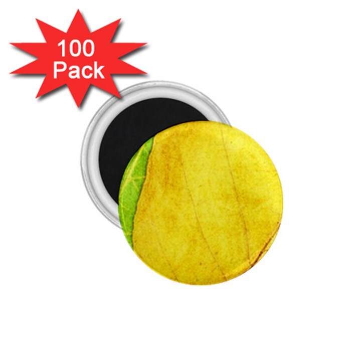 Green Yellow Leaf Texture Leaves 1.75  Magnets (100 pack)