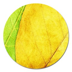 Green Yellow Leaf Texture Leaves Magnet 5  (round) by Alisyart