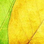 Green Yellow Leaf Texture Leaves Magic Photo Cube Side 1