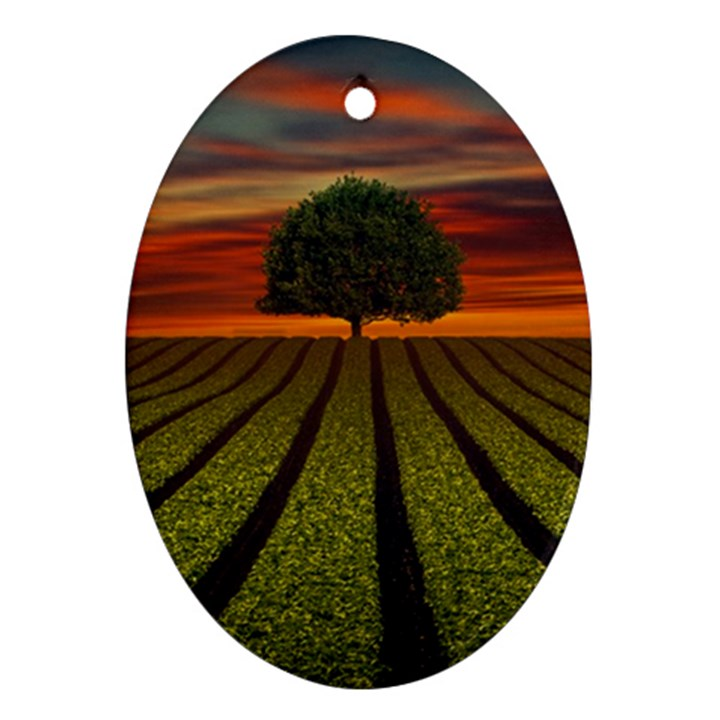 Natural Tree Ornament (Oval)