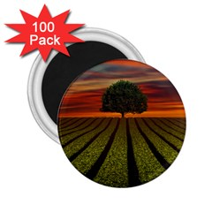 Natural Tree 2 25  Magnets (100 Pack)