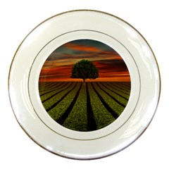 Natural Tree Porcelain Plates