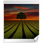 Natural Tree Canvas 20  x 24  24 x20 Canvas - 1