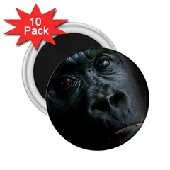 Gorilla Monkey Zoo Animal 2 25  Magnets (10 Pack)