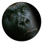 Gorilla Monkey Zoo Animal Magnet 5  (Round) Front