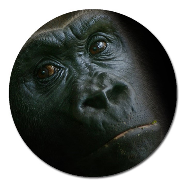 Gorilla Monkey Zoo Animal Magnet 5  (Round)