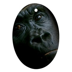 Gorilla Monkey Zoo Animal Oval Ornament (Two Sides)