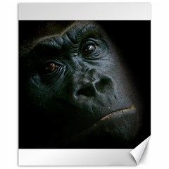 Gorilla Monkey Zoo Animal Canvas 11  X 14