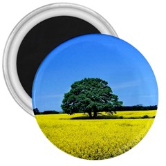 Tree In Field 3  Magnets