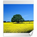Tree In Field Canvas 8  x 10  10.02 x8 Canvas - 1