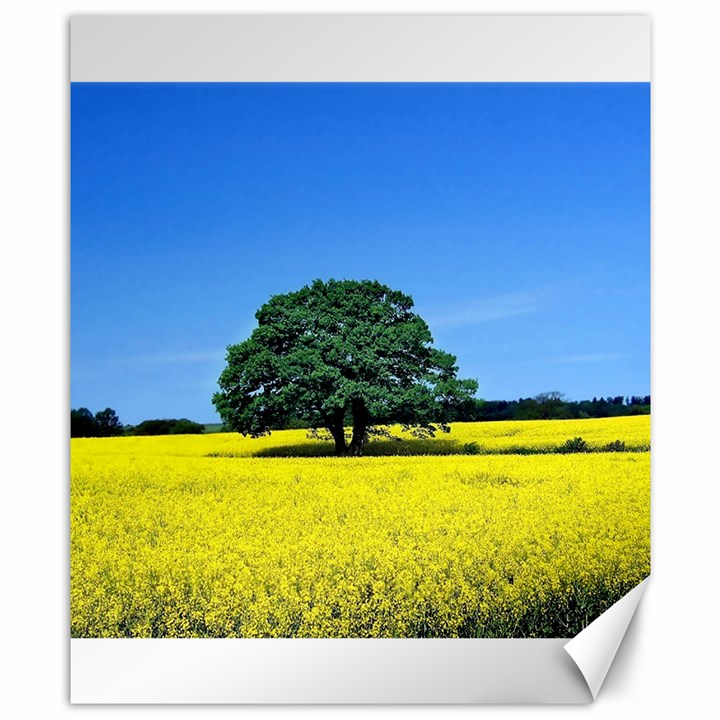 Tree In Field Canvas 8  x 10