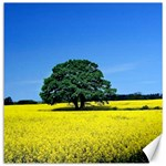 Tree In Field Canvas 20  x 20  20 x20 Canvas - 1