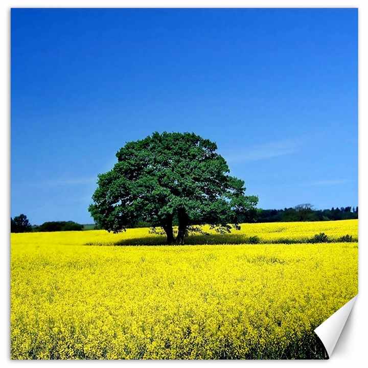 Tree In Field Canvas 20  x 20