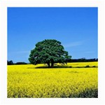Tree In Field Medium Glasses Cloth Front