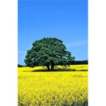 Tree In Field 5.5  x 8.5  Notebook Front Cover
