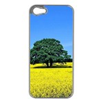 Tree In Field Apple iPhone 5 Case (Silver) Front