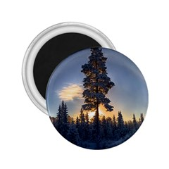 Winter Sunset Pine Tree 2 25  Magnets