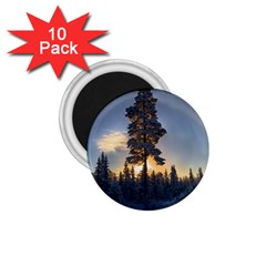 Winter Sunset Pine Tree 1 75  Magnets (10 Pack)