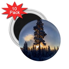 Winter Sunset Pine Tree 2 25  Magnets (10 Pack)