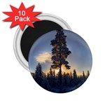 Winter Sunset Pine Tree 2.25  Magnets (10 pack)  Front