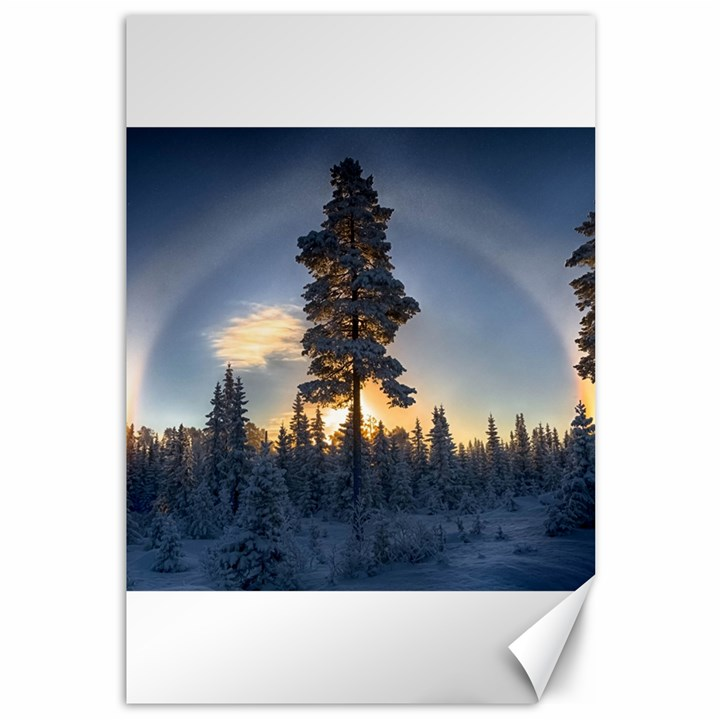 Winter Sunset Pine Tree Canvas 12  x 18