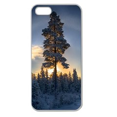 Winter Sunset Pine Tree Apple Seamless Iphone 5 Case (clear)